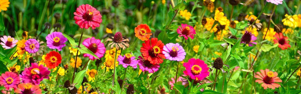 Blomster som symboliserer blomsterbryllup.